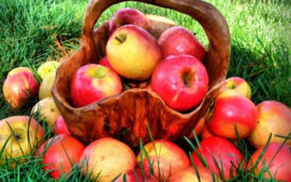 Яблоки для восстановления печени